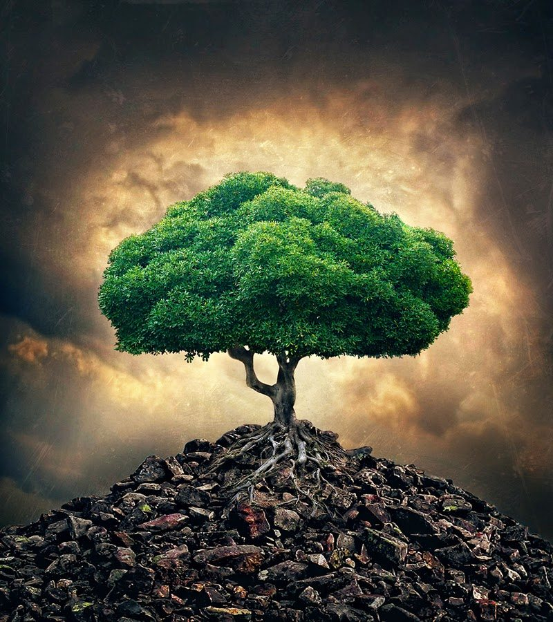 Personal Transformation: 180 Degrees Of Inner ConflictAlienated Me